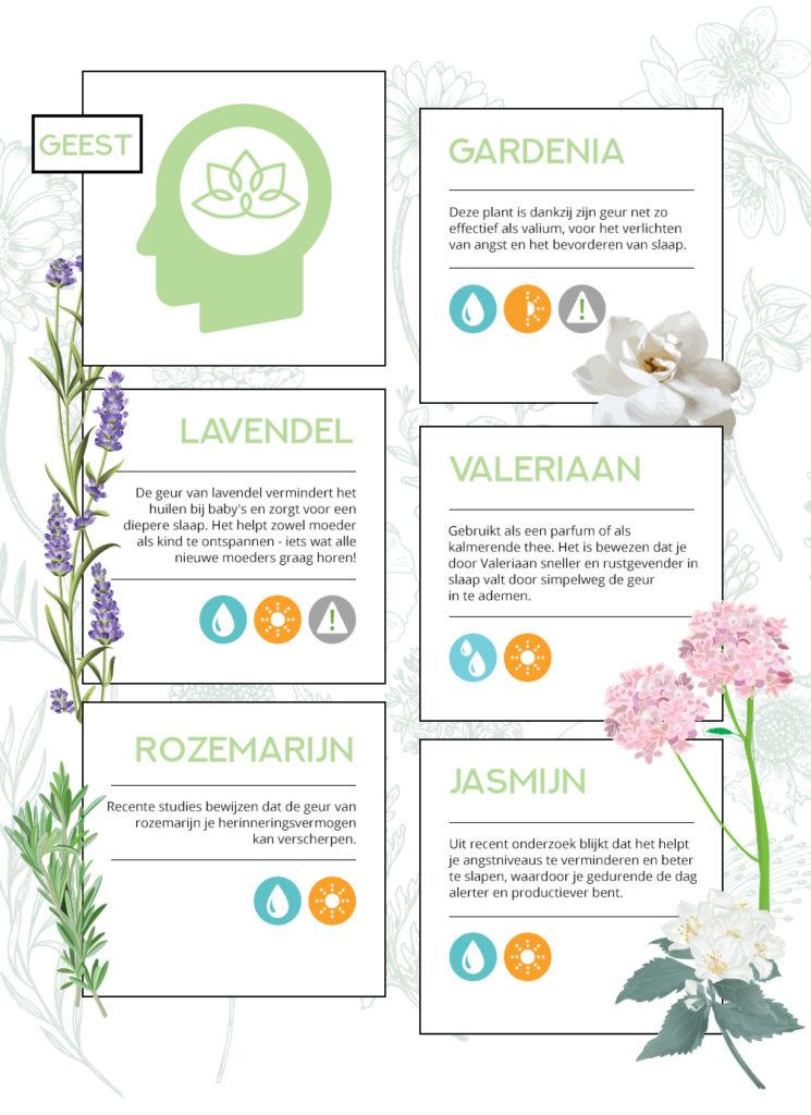 de kracht van planten op je geest