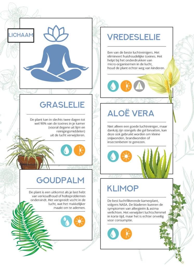 de kracht van planten op je lichaam